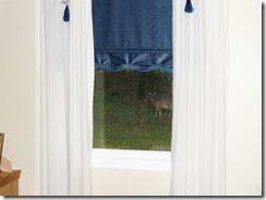 Peeping Tom Deer