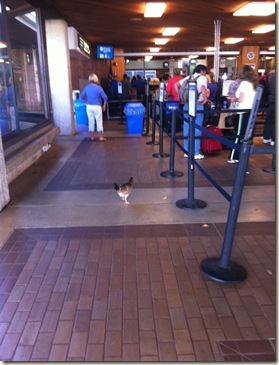 chicken at airport