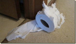 TP destroyed by cat