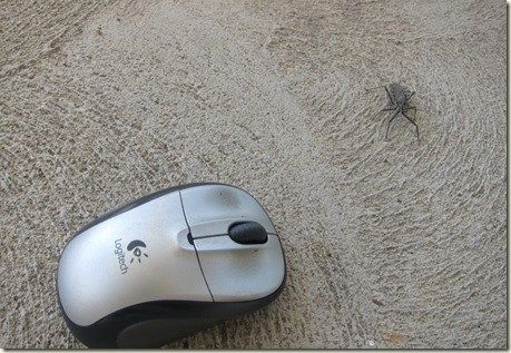 giant bug with mouse
